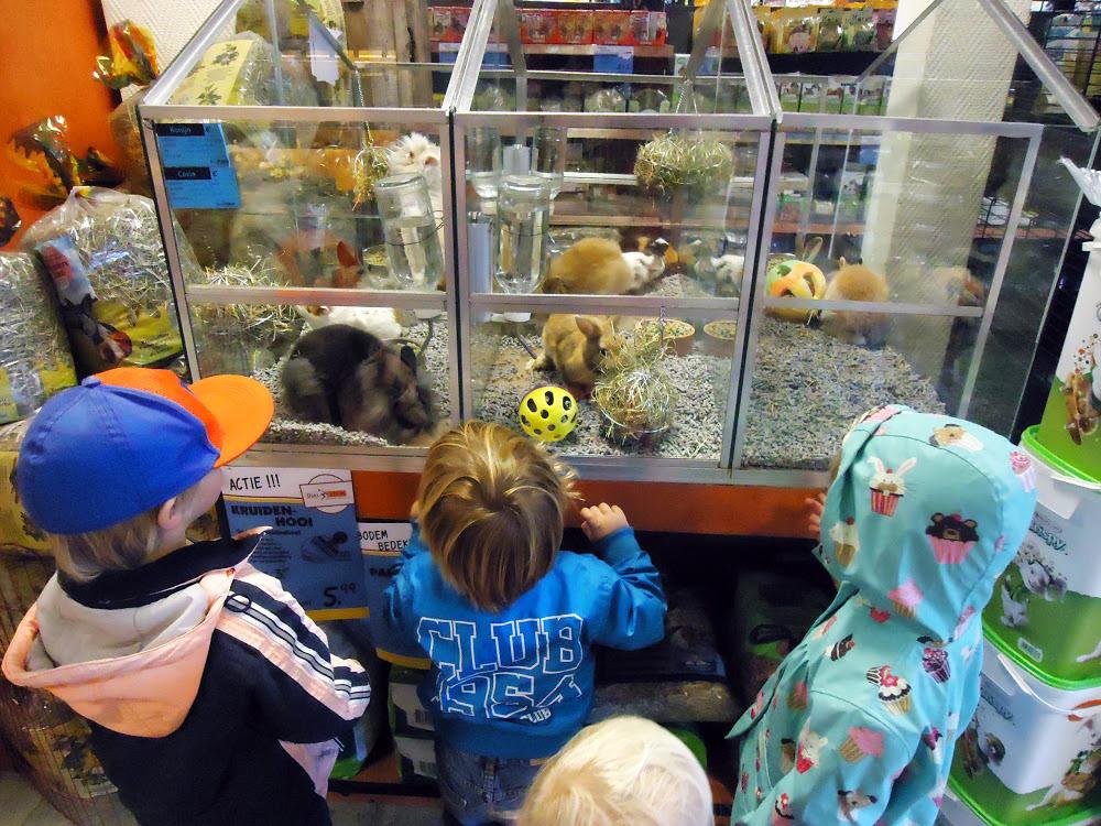 dierenwinkel1